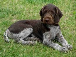 what does a bird dog breeds mean dog breeds puppies
