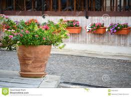 Vinca Flower Information - vinca flower pots stock photo image 44254632