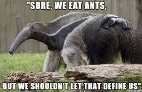 Anteater Meme - anteater consolation meme on imgur