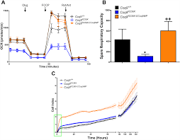 plos one gene therapy corrects mitochondrial dysfunction in