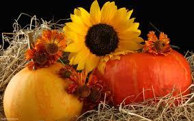 iphone pumpkin wallpaper image gallery of fall harvest wallpaper iphone