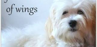 sympathy for loss of dog pet condolence messages sympathy card messages