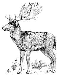 file fallow deer psf png the work of god u0027s children