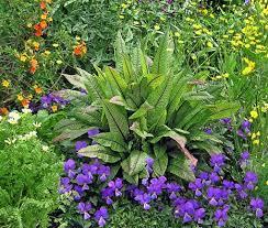 16 best ornamental edibles images on herbs capsicum