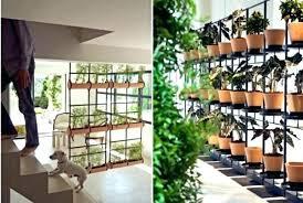 Design For Indoor Flowering Plants Ideas Indoor Plant Ideas Filterstock