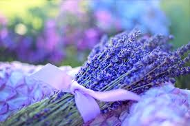 fresh flowers free photo lavender fresh flowers herbal free image on