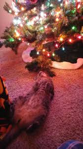Cat Climbing Christmas Tree Video I Can Has Cheezburger Christmas Tree Funny Animals Online