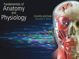 Anatomy And Physiology Human Body Holes Essentials Of Human Anatomy And Physiology Ninth Edition