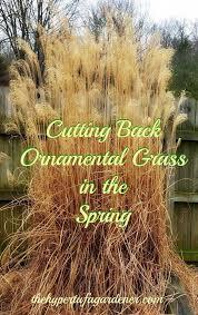 89 best grasses images on ornamental grasses garden