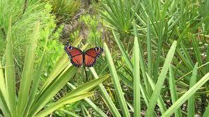 wildlife wednesday help u0027reverse the decline u0027 of butterflies