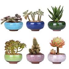 small planter wituse 2 5 inch small planters cactus planter pot for succulents