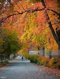 beautiful autumn colored trees line the esplanade in chico