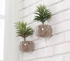 planters that hang on the wall amazon com clear glass wall mounted plant terrariums hanging