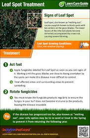 leaf spot treatment u0026 control how to get rid of leaf spot disease
