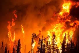 Wildfire Edinburgh Book by Forest Fire Jpg