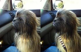 Chewbacca Memes - chewbacca dog animals know your meme