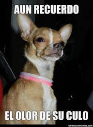 Memes De Chihuahua - deluxe memes de chihuahua memes de perros travesuras caninas 80
