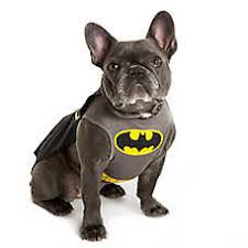 Halloween Batman Costumes Dog Costumes Shop Small U0026 Large Dog Costumes Petsmart