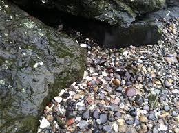 pacific nw beachcombing field reports