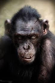 Planet Of The Blind Dawn Of The Planet Of The Apes Concept Art Ojo Monkeys