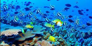 Padi Dive Table by Reef Experience And Kuranda Dive Tables