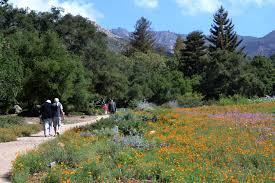 Garden Botanical Santa Barbara Botanic Garden Visit Santa Barbara