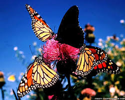 115 best butterflies u0026 nature images on pinterest beautiful