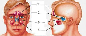 can sinus infection cause dizziness light headed the symptoms of acute sinusitis easy breathe