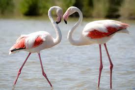 20 fun facts about flamingos bird trivia