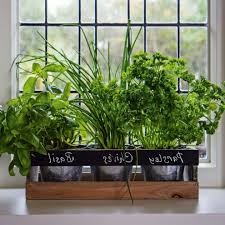amazing 70 indoor garden box inspiration of indoor garden box