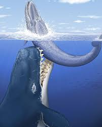 facts about leviathan the giant prehistoric whale