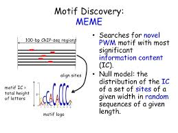 Meme Motif Search - motif based analysis of chip seq data timothy bailey