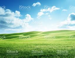 perfect field of spring grass stock photo 499649614 istock