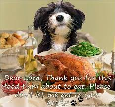 thanksgiving prayers and safety tips for dogs