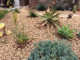 drought tolerant native plants native gardening skechers the source