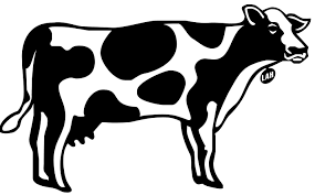 cow print out pictures to pin on pinterest pinsdaddy