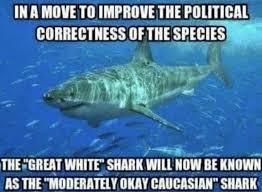 Funny Shark Meme - coolest 20 funny shark meme wallpaper site wallpaper site