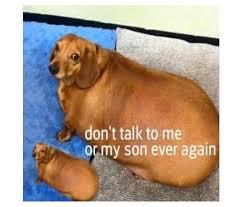 Original Doge Meme - original doge meme loft wallpapers