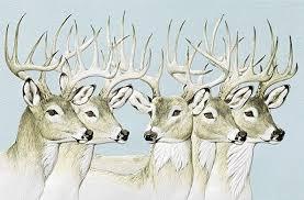pumpernickel press wildlife cards five bucks wildlife embossed birthday cards