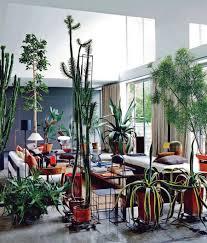 apartment plants apartment plants