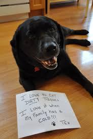 220 best dogs bad dog u0026 shaming images on pinterest funny dogs