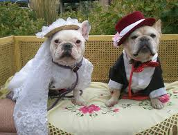 dog wedding dress dog tuxedos wedding gowns and other formal wear bulldogs