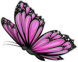 pink butterfly transparent png clip image gallery