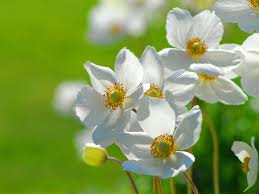 Nice Flowers Wallpapers Flowers Beautiful Wallpapers And Pictures