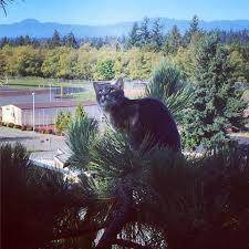 canopy cat rescue home facebook