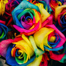 roses flowers rainbow flower seeds rama deals