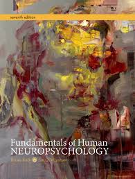 fundamentals of human neuropsychology 9781429282956 macmillan