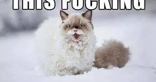 Cat Cocaine Meme - i fucking love this cocaine addicted cat album on imgur