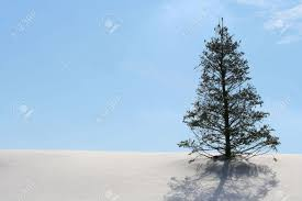winter wonderland with christmas tree on hill stock photo picture