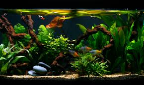 How To Clean Fish Tank Decorations How Clean Is Your Bottom U2014 Practical Fishkeeping Magazine